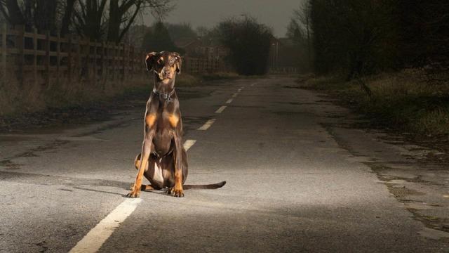 ДТП с животными. Ответственность за наезд на животное